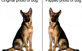 PowerPoint vs. Photoshop: Making pictures better by flipping them